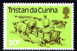1983, Tristan Da Cunha, Bœuf, Charrette, Transport - Tristan Da Cunha