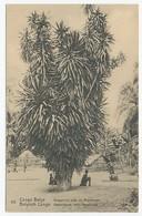 Postal Stationery Belgian Congo Dragon Tree - Bomen