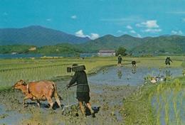 HONG KONG - NEW TERRITORIES - CHINESE FARMERS - Chine (Hong Kong)