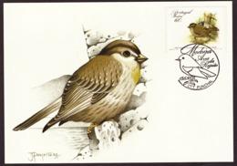 Portugal 1988 - Birds Of Madeira 60$00 2° Grupo Postcard   Subscrito 1°dia - 1910-... Republic
