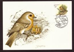 Portugal 1988 - Birds Of Madeira  27$00 2° Grupo Postcard   Subscrito 1°dia - 1910-... Republic