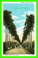 HABANA, CUBA - CALLE DE PALMAS - ROYAL PLAM AVENUE, ANIMATED - C. JORDI - - Cuba
