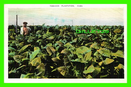 HABANA, CUBA - TOBACCO PLANTATION, ANIMATED -  PUB. BY ROBERTS & CO - - Cuba