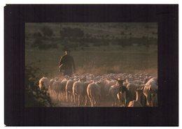 CPM    IN EDITE  07   PLATEAU DES GRAS      BERGER ET SON  TROUPEAU - Elevage