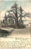 LIERNU  Environs De Namur Vieux Chêne Liernu - Tellin