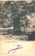 LIERNU  Le Chêne De Liernu. - Tellin