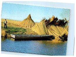 Schilfgewinnung Am Neusiedler See - Neusiedlerseeorte