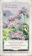 Chromos Chocolat Aiguebelle Série Les Plantes Médicinales Saponaire - Aiguebelle