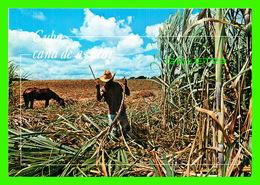 HABANA, CUBA - MACHETERO EN PLENA LABOR - CANNE CUTTER AT WORK - EDICIONES, GIANNI COSTANTINO - - Cuba