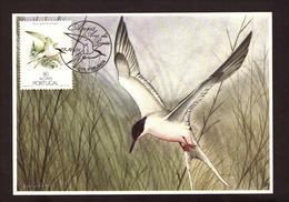 Portugal 1988 - Birds Of Açores 80$00  Postcard   Subscrito 1°dia - 1910-... Republic