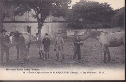 GIRONDE – Ecole D'Agriculture De Blanquefort – Les Poulains - Blanquefort