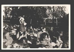 Walcheren - Kippenvoederen Op Walcheren - Geanimeerd - 1951 - Chicken / Poulet - Nederland