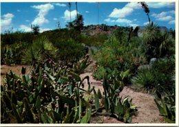 New Mexico Columbus Poncho Villa State Park Cactus - Etats-Unis