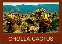 New Mexico Teddy Bear Cholla Cactus - Etats-Unis