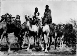 AFRIQUE - AGADES - Caravane Du Sel - Niger