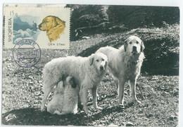 Albania 1967 Dog Chien Maximum Card 1V - Cani