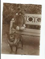 Old Original Photo Serbia - 1930s - Dog - Anonyme Personen