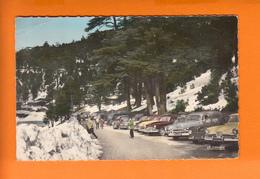 """IFRANE  Maroc  CPSM   """" Le Parc à VOITURES  """"    Le 9 7 1968 56   ANIMEE Avec VOITURES Num 95.422.64 - Maroc"""