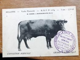 Très RARE !!!cpa HONDSCHOOTE Vache Flamande Au GRAND PALAIS à LILLE 1923 HERD BOOK N°1154 - Hondshoote