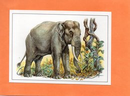 ANIMAL.ELEPHANT D' ASIE. Carte En Achat Immédiat - Éléphants
