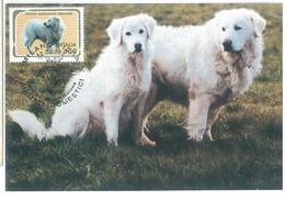 Italy 1994 Dog Chien Maximum Card 1V - Cani