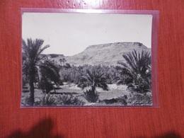 Erfoud - La Vallée Du Riz - 12e Régiment Le Vaguemestre De Chasseurs D'afrique - Maroc