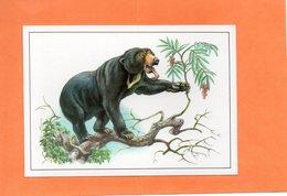 ANIMAL. OURS DE MALAISIE. Carte En Achat Immédiat - Ours