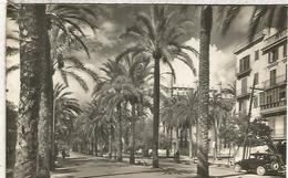 MALLORCA PALMA PASEO SAGRERA ESCRITA - Mallorca