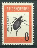 BM Albanien 1963 | MiNr 737 | MNH | Insekten, Riesen Laufkäfer - Albanie