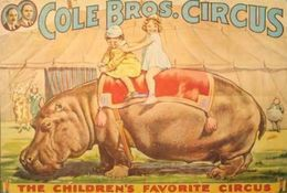 @@@ MAGNET - Cole Bros Circus, Hippo - Publicitaires