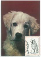 Poland 1977 Dog Chien Maximum Card 1V - Cani