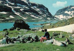 1 AK Norwegen * Die Landschaft In Der Gebirgsregion Haukelifjell In Den Provinzen Telemark Und Hordaland * - Norwegen
