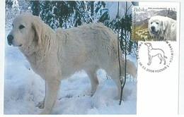 Poland 2006 Dog Chien Maximum Card 1V - Cani