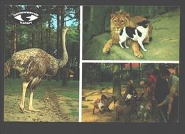 Zillebeke - Bellewaerde Safari - Struisvogel / Ostrich / Autruche - Ieper