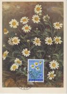 Yougoslavie Carte Maximum Fleurs 1955 Camomille 671 - Cartes-maximum