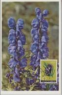 Yougoslavie Carte Maximum Fleurs 1959 Aconit 786 - Cartes-maximum