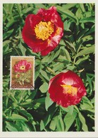 Yougoslavie Carte Maximum Fleurs 1969 Pivoines 1224 - Cartes-maximum