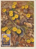 Yougoslavie Carte Maximum Fleurs 1969 Tussilage 1225 - Cartes-maximum