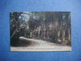 SAINT RAPHAEL  -  83  -  Allée Des Mimosas  Sous Bois Cucalyptus  -  VAR - Saint-Raphaël