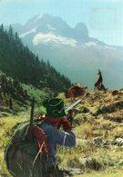 Chasse Au  Chamois - Hunting