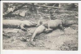 Bruxelles - Exposition - L'incendie Des 14-15 Aout 1910 - Bruxelles - Kermesse -Deux Victimes Les Crocodiles De Pernelet - Belgien