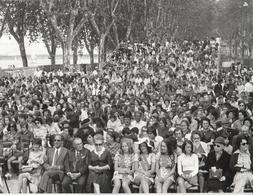 Photo. Professionnelle : Tournon - Ardèche - Reine Et Dauphines Au Premier Plan : Féte Des Fruits Et Des Vins - 1972 - - Places