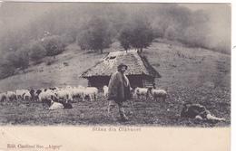 575/ Stana Din Clabucet, Schaapsherder Met Schapen, Romania - Roemenië