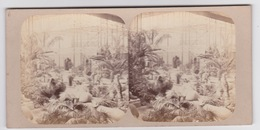 Stereoscopische Kaart. The Chystal Palace Art Union Of 1859.    Partie Du Jardin Des Indes - Cartes Stéréoscopiques