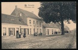 BEERVELDE - BEIRVELDE   -   VRIJHEIDSBOOM - Lochristi