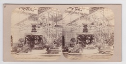 Stereoscopische Kaart. The Chystal Palace Art Union Of 1859.   Jardin Des Indes.  Fontaine - Cartes Stéréoscopiques