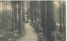 Elsenborn - Camp D'Elsenborn - Parc Au Mess Des Officiers - 1935 - Elsenborn (Kamp)