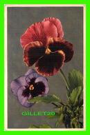 FLEURS - VIOLA TRICOLOR - PENSÉE - PANSY, PANZEA - CIRCULÉE EN 1954 - - Fleurs