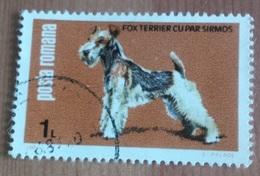 """Chien """"Fox Terrier"""" (Animaux) - Roumanie - 1981 - 1948-.... Républiques"""
