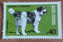 """Chien """"Berger De L'Europe Du Sud Est"""" (Animaux) - Roumanie - 1981 - 1948-.... Républiques"""